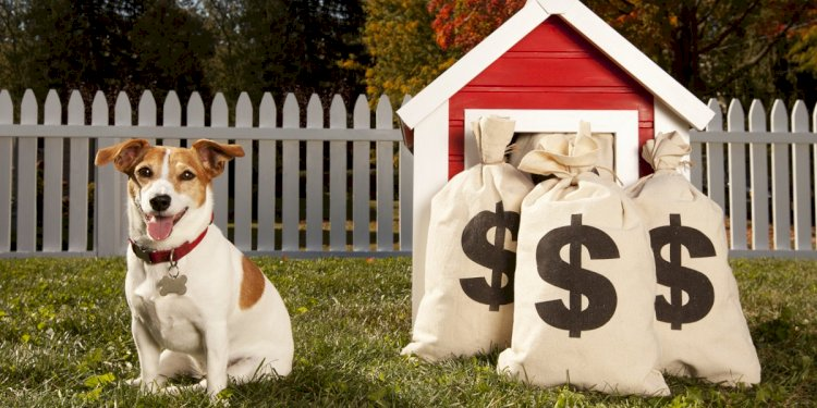 Buying a Dog - Step Five: Costs and Health