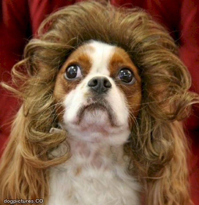 Dog Grooming and Hygiene: Types of Dog Hair