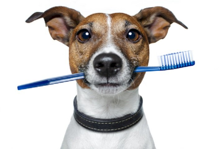 Dog Grooming and Hygiene: Brushing your Dog's Teeth
