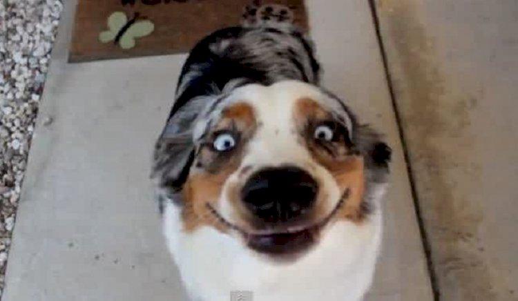 Dog Psychology: Understanding Man's best Friend