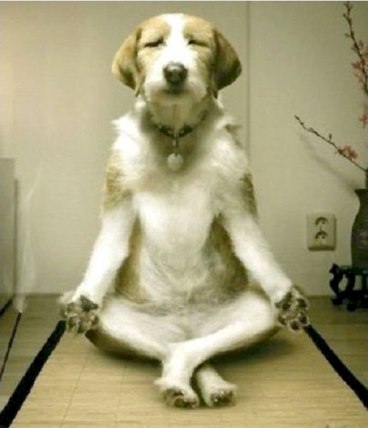 Dog Psychology: Dominance and Dog Training