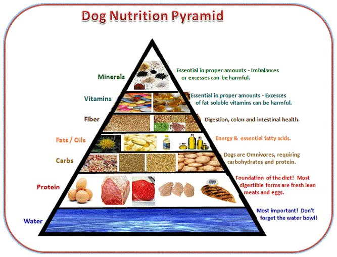Nutrition: Types of Dog Food - The Basics