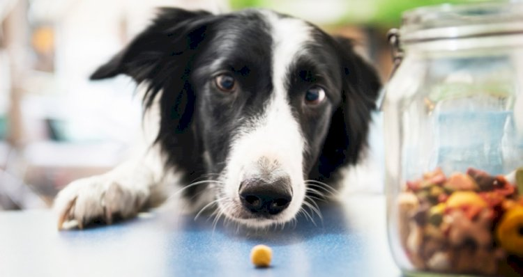 Nutrition:  How much to feed a dog to meet its energy needs