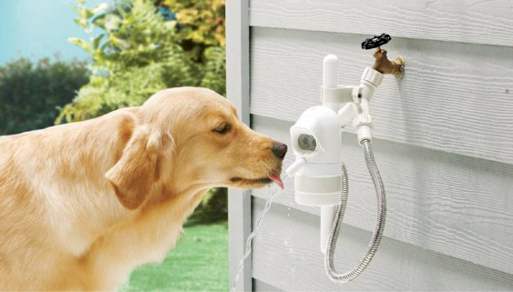 Nutrition:  Dehydration and Water needs in dogs