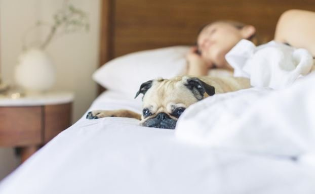 4 Benefits Sleeping with your Pet