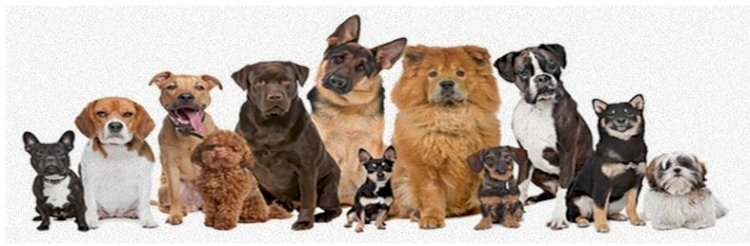 Learn Everything about Every Breed!!!